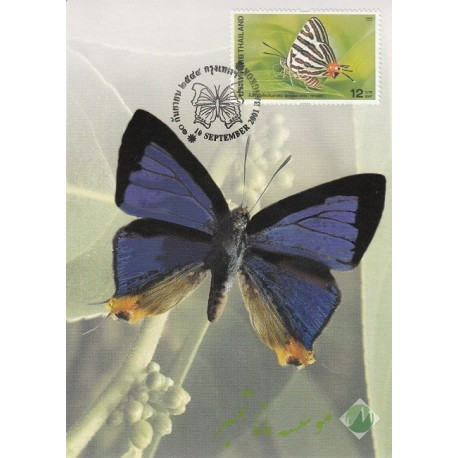 4 عدد کارت پستی تایلند(پروانه)