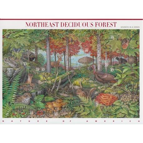 مينى شيت جنگلهاى آمريكا